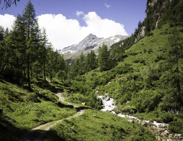 Sommer Aktiv im Sommer Wandern Seidlwinkltal